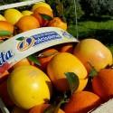 Mixed citrus fruit