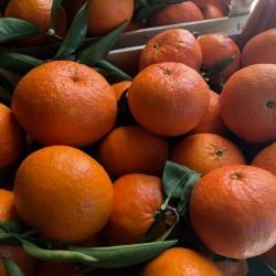 Nova Clementines